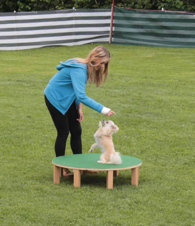 Dog Dance