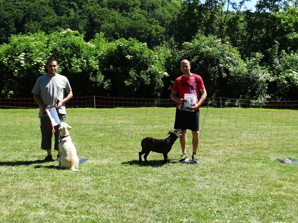 Sommerfest-2017-Hunderennen-W